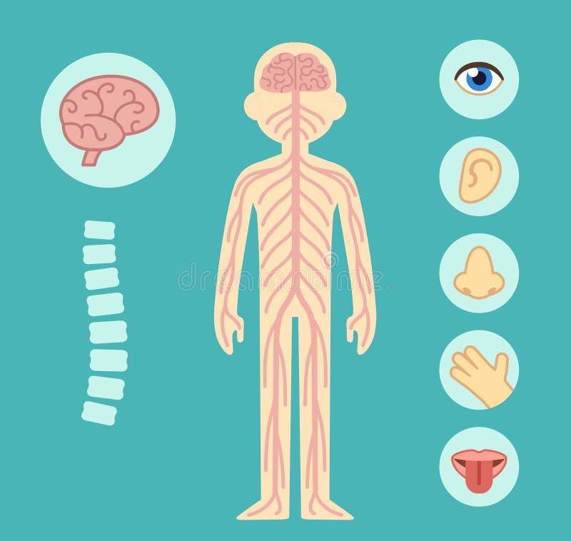 Sistema nervioso ilustración del vector