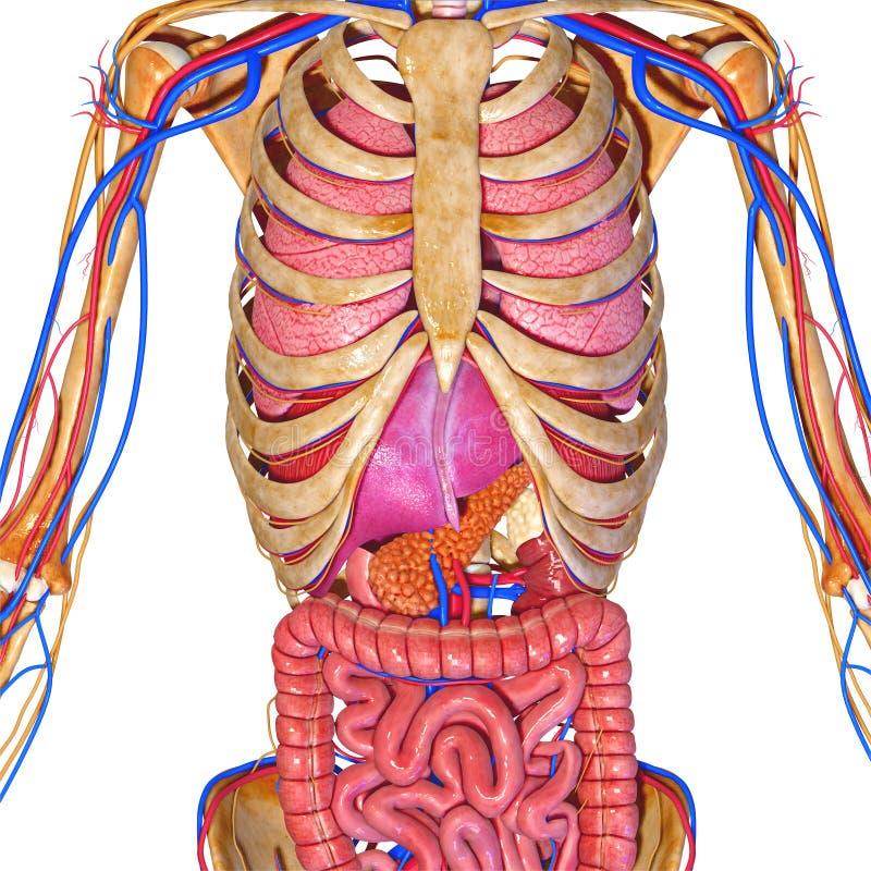 Sistema De Organos