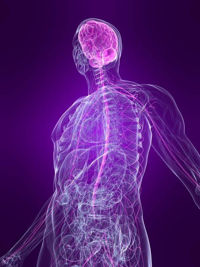 Sistema nervoso destacado ilustração royalty free