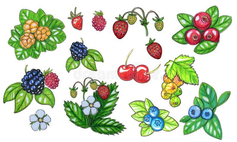 Sistema pintado a mano de la acuarela de bayas libre illustration