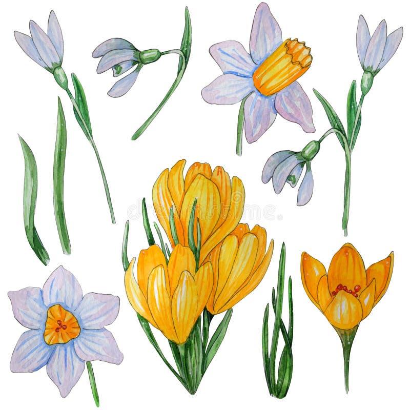 Sistema pintado a mano de la acuarela de flores de la primavera ilustración del vector