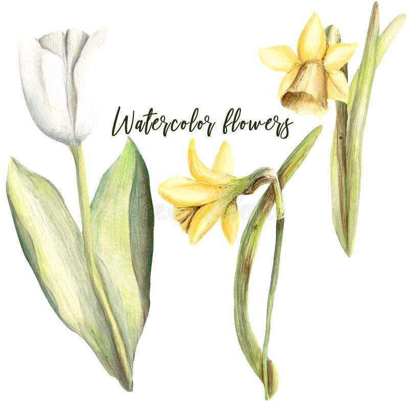 Sistema pintado a mano del handpaint de la acuarela de objetos Flores florales libre illustration