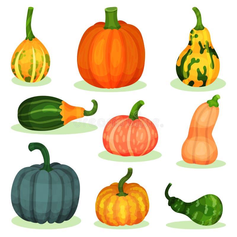 Sistema plano del vector de diversas calabazas maduras Producto agrícola natural Planta agrícola Comida orgánica y sana libre illustration