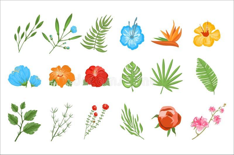 Sistema plano del vector de plantas tropicales Flores exóticas con los pétalos brillantes y las pequeñas ramas con las hojas Tema ilustración del vector