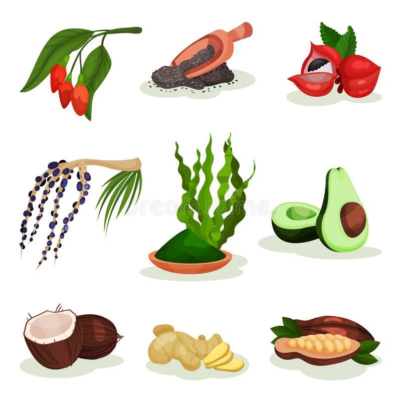 Sistema plano del vector de superfood Bayas de Goji y del acai, aguacate, coco, hierba del spirulina, semillas del chia, guarana, ilustración del vector
