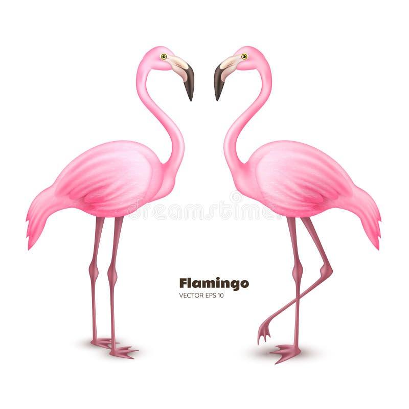 Sistema realista del flamenco del rosa 3d del vector stock de ilustración