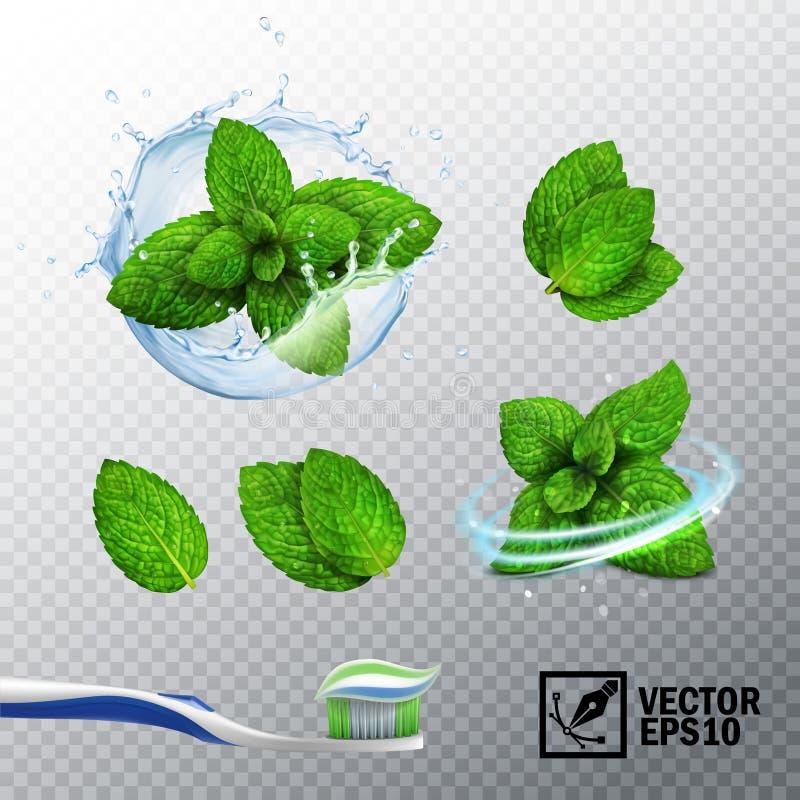 sistema realista del vector 3D, chapoteo transparente del agua con un brote de la menta, diversas opciones para las hojas de ment libre illustration