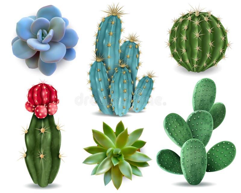 Sistema realista suculento del cactus stock de ilustración