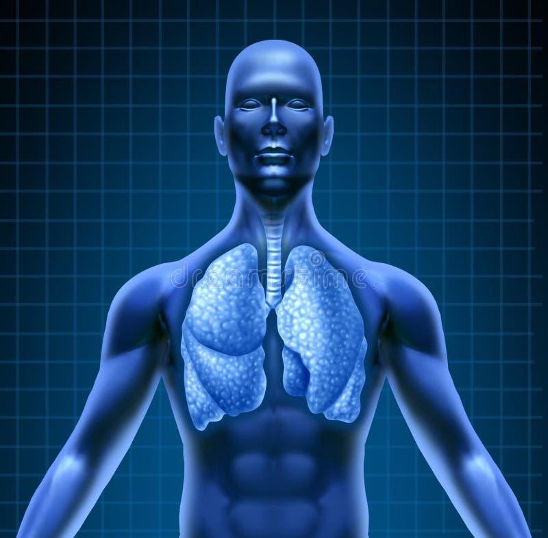 Sistema repiratory umano illustrazione vettoriale