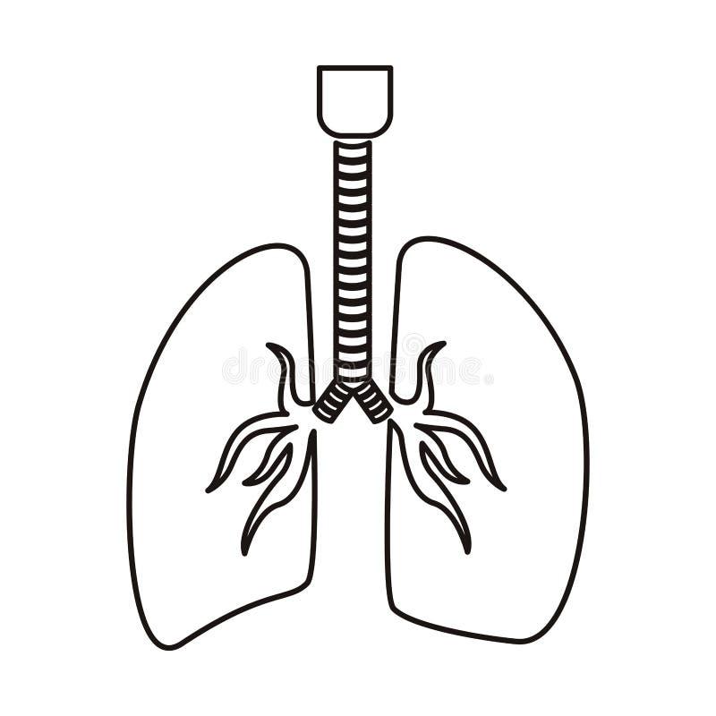 Sistema Respiratorio Del Contorno Con Los Pulmones Ilustración del ...
