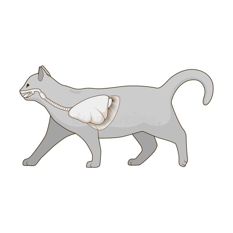 Sistema Respiratorio Del Ejemplo Del Vector Del Gato Ilustración del ...