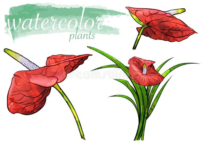 Sistema rojo de la flor de la acuarela ilustración del vector