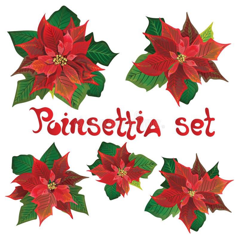 Sistema rojo de las flores del vector de la poinsetia Ejemplo de los símbolos de la Navidad Planta floreciente de Pulcherrima Poi ilustración del vector