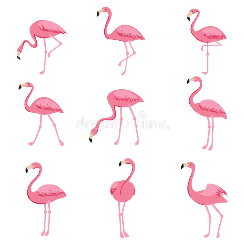 Sistema rosado del vector del flamenco de la historieta Colección linda de los flamencos libre illustration