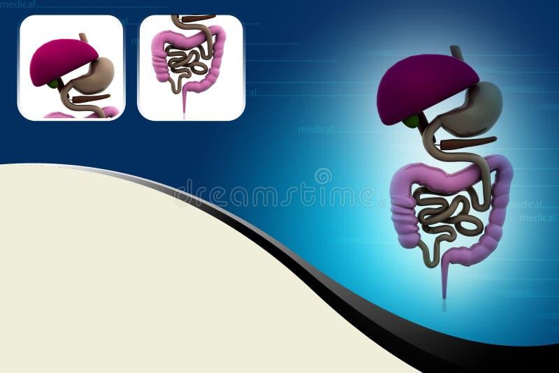 Sistema systemdigestive digestivo ilustração royalty free