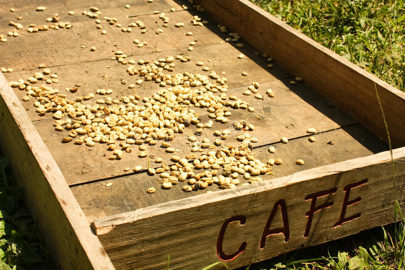 Sistema tradicional de secar o café fotos de stock
