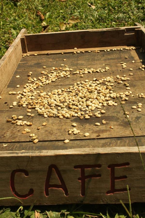 Sistema tradicional de secar o café imagem de stock