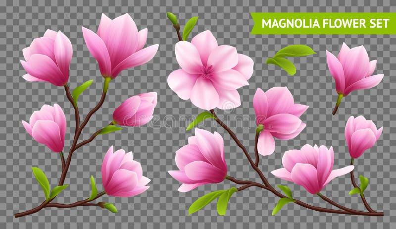 Sistema transparente del icono de la flor realista de la magnolia stock de ilustración
