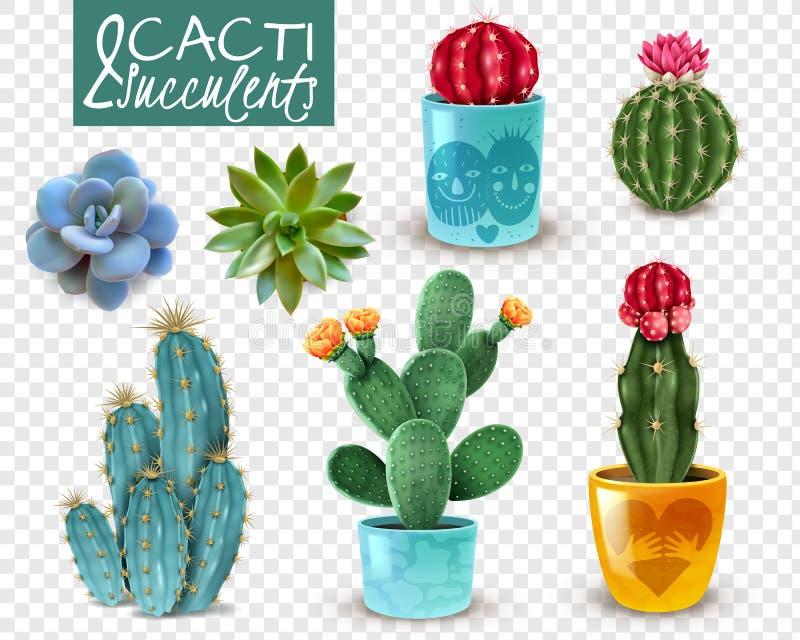 Sistema transparente realista suculento del cactus ilustración del vector
