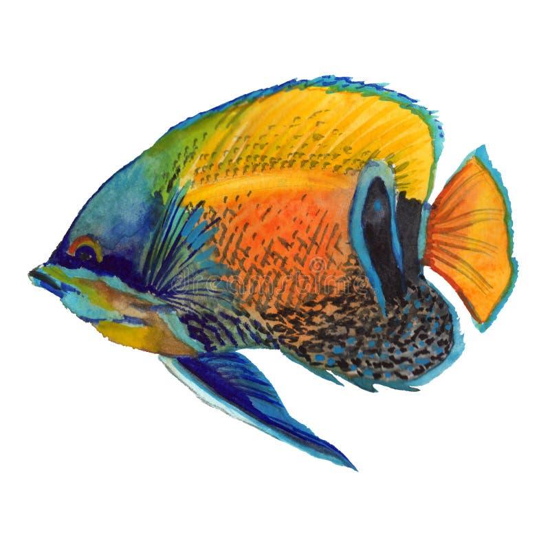 Sistema tropical colorido subacuático acuático de los pescados de la acuarela Mar Rojo y pescados exóticos dentro libre illustration