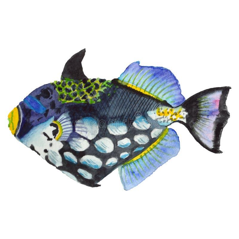 Sistema tropical colorido subacuático acuático de los pescados de la acuarela Mar Rojo y pescados exóticos dentro imagen de archivo