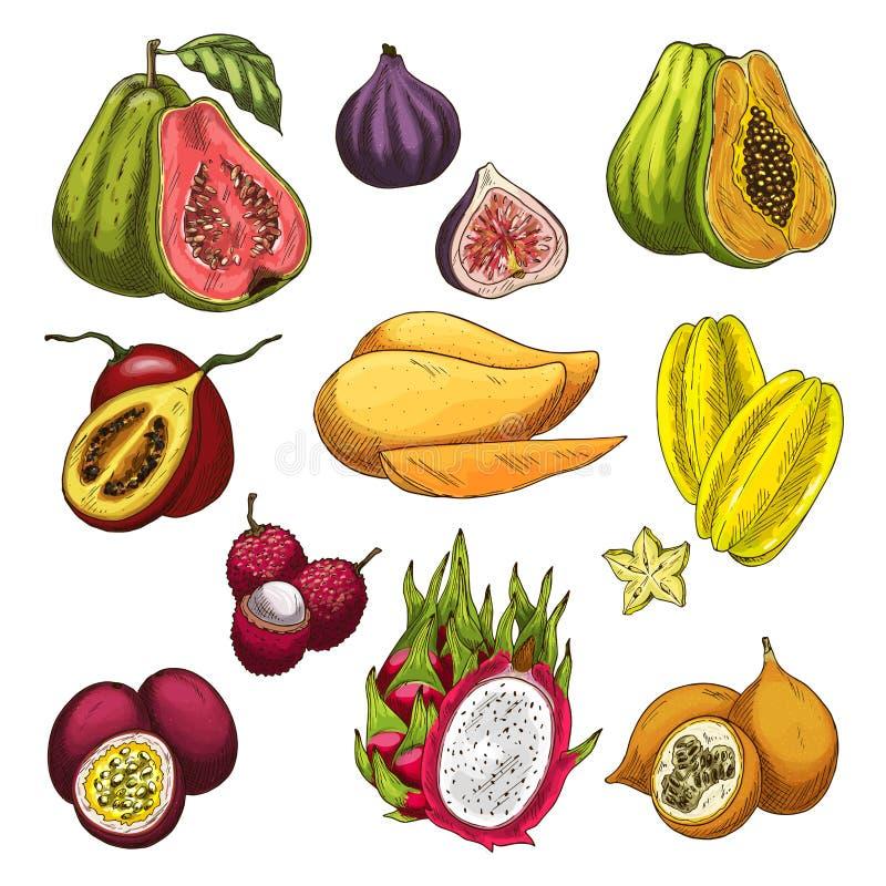 Sistema tropical del bosquejo del producto agrícola de la fruta exótica ilustración del vector