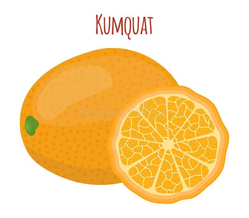 Sistema tropical del kumquat, fruta exótica Estilo plano de la historieta Ilustración del vector stock de ilustración