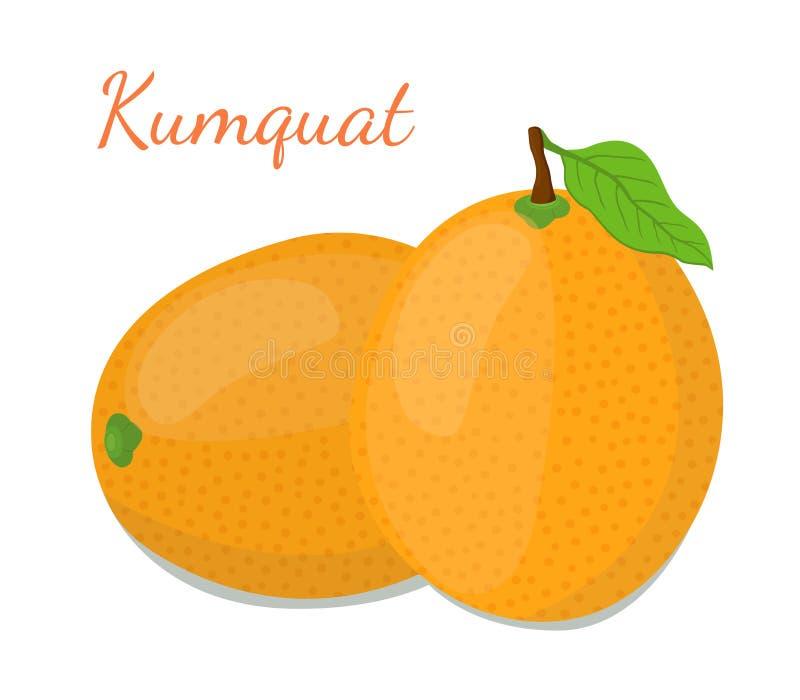 Sistema tropical del kumquat, fruta exótica Estilo plano de la historieta Ilustración del vector ilustración del vector