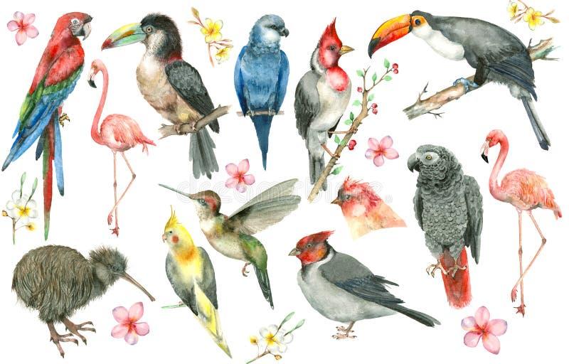 Sistema tropical del pájaro stock de ilustración