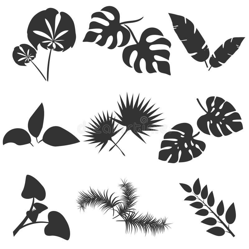 Sistema tropical del vector de las siluetas de las hojas aislado en el fondo blanco Diversa colección de la hoja Flora del bosque stock de ilustración