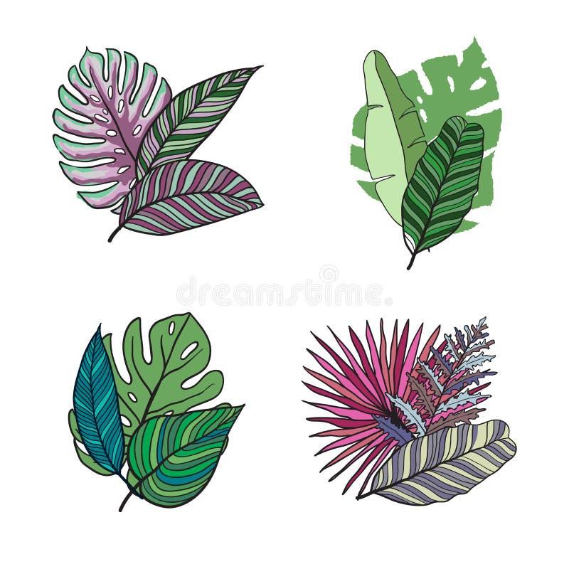 Sistema tropical dibujado mano del vector del color de las hojas Fije la hoja exotics Ejemplo botánico del vector del vintage libre illustration