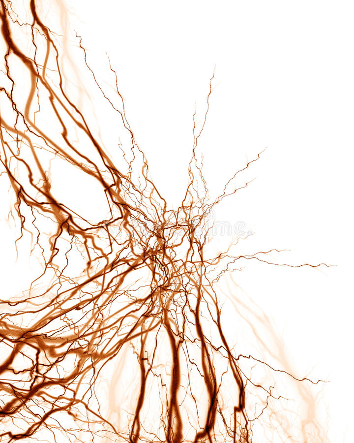 Sistema umano del nervo royalty illustrazione gratis