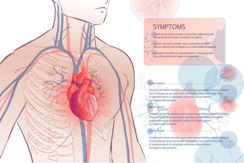 Sistema vascular circulatório humano ilustração do vetor