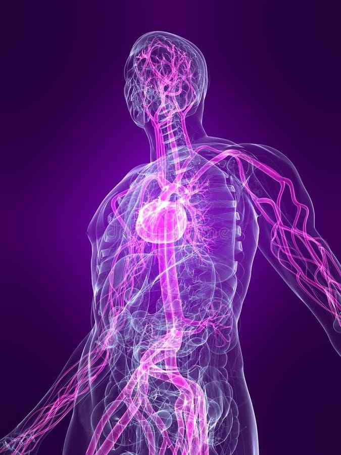 Sistema vascular destacado ilustração royalty free