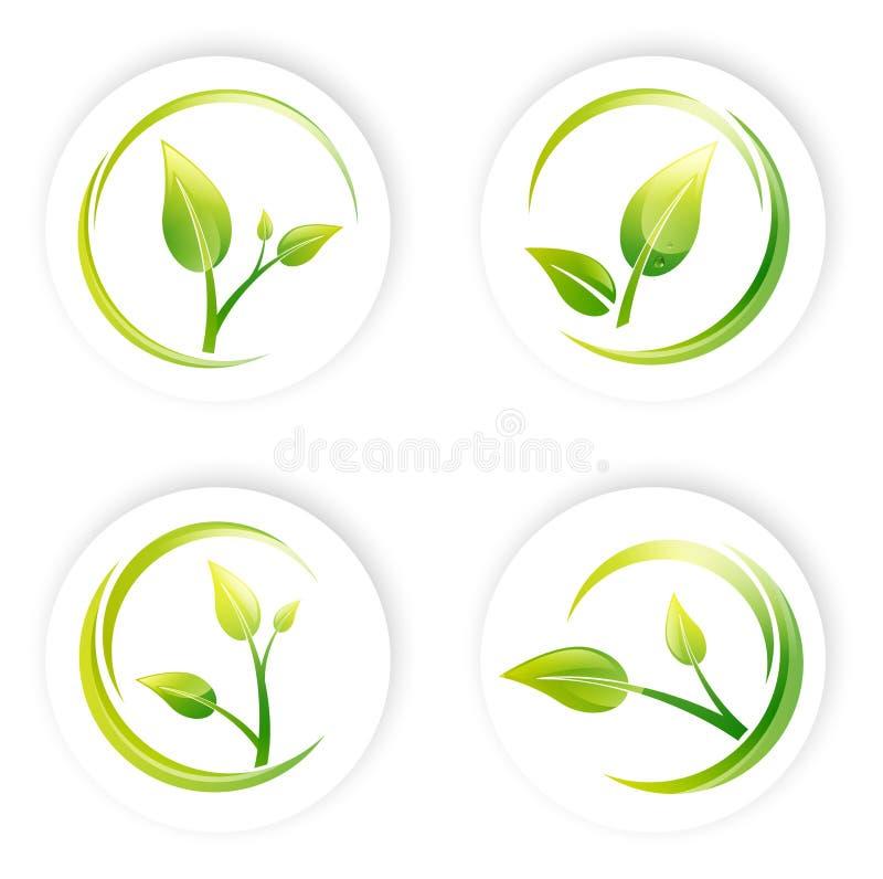 Sistema Verde Del Diseño De La Hoja Del Brote Foto de archivo