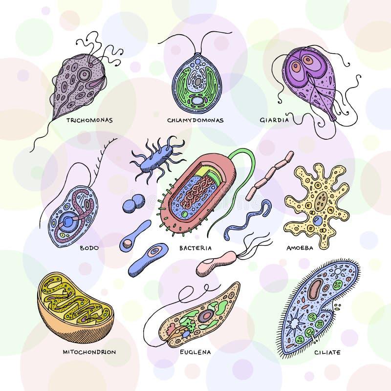 Sistema virulento de la bacteria del ejemplo de tipo virus de la enfermedad de la infección bacteriana del vector del virus de or stock de ilustración