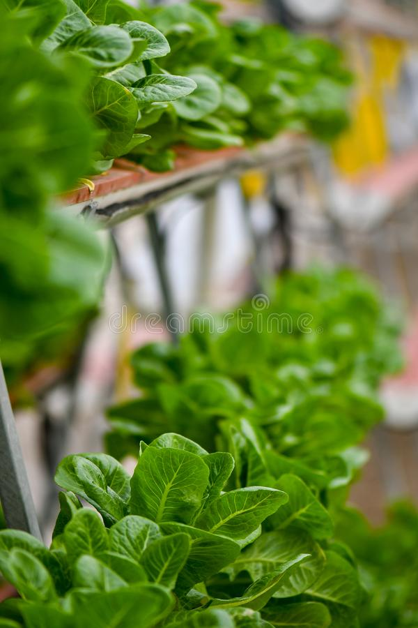 Sistemas de cultivo verticais hidrop?nicos imagem de stock royalty free
