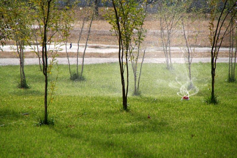 Sistemas de extinção de incêndios automáticos que molham a grama verde no parque imagem de stock royalty free