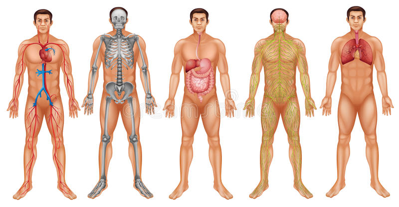 Sistemas del cuerpo libre illustration