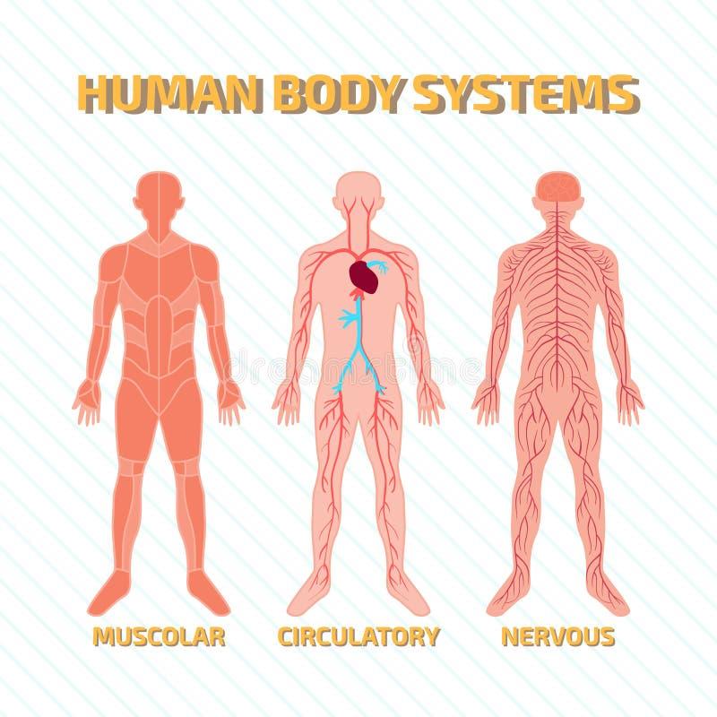 Sistemas do corpo humano ilustração royalty free