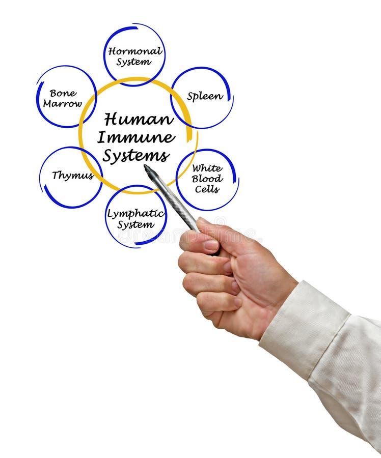 Sistemas inmunes humanos foto de archivo
