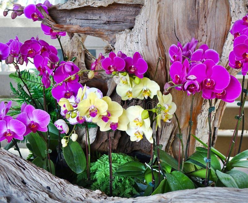 Sistemazione del fiore degli orchidee tropicali immagine stock libera da diritti