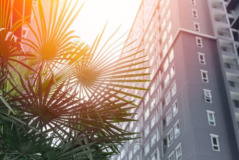 Sistemazione verde di eco della città con il parco dell'albero immagine stock libera da diritti