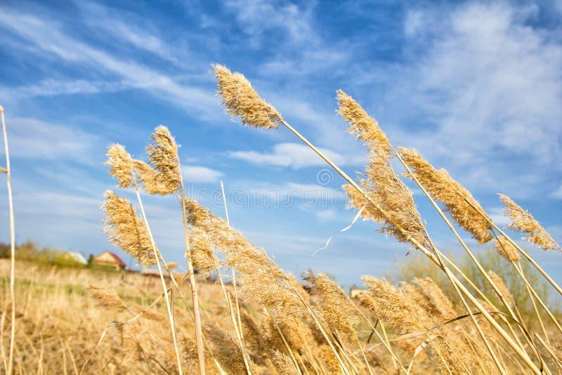 Sistemi con alta erba fotografie stock libere da diritti