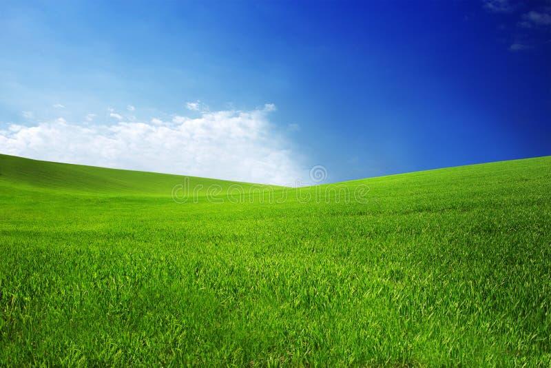 Sistemi con erba verde e cielo blu con le nuvole sull'azienda agricola nel giorno soleggiato della bella estate Pulito, idilliaco immagine stock libera da diritti
