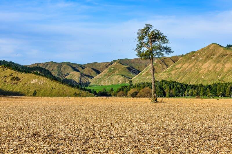 Sistemi con l'albero solo nel parco nazionale di Whanganui, Nuova Zelanda fotografia stock