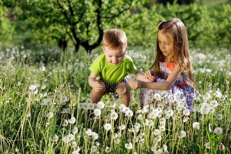 Dandelion field white girl boy happy little baby green meadow yellow flowers dandelions nature park garden two family sister broth royalty free stock photography