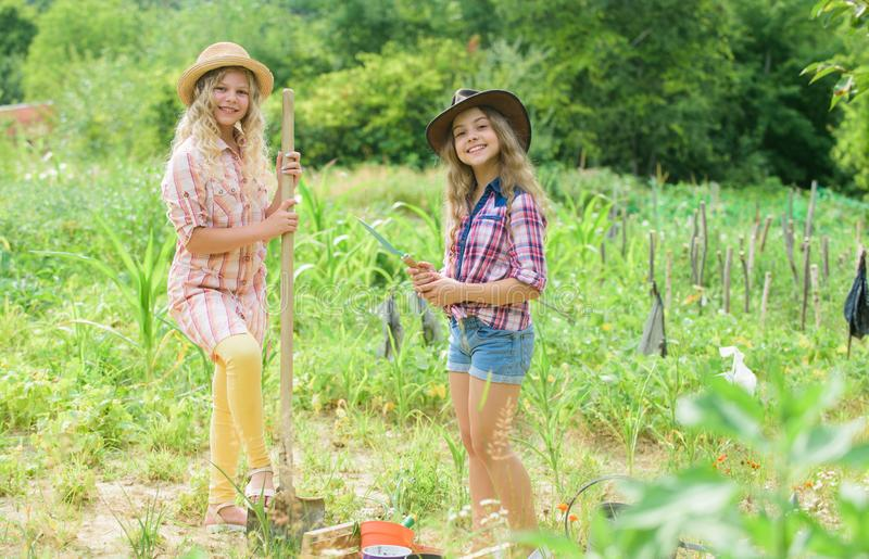 Sisters together helping at farm. Girls planting plants. Rustic children working in garden. Planting and watering. Planting vegetables. Agriculture concept royalty free stock image