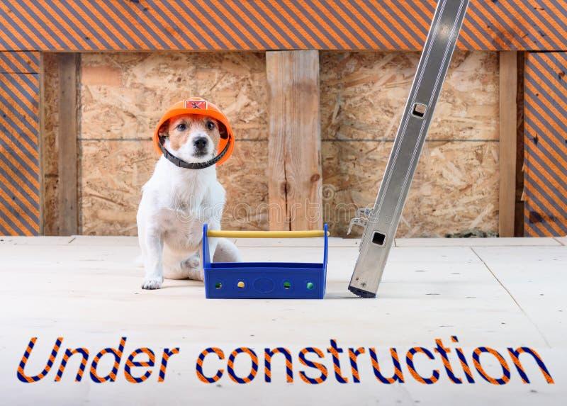 Site en construction avec le chien en tant que constructeur drôle utilisant le casque antichoc image stock