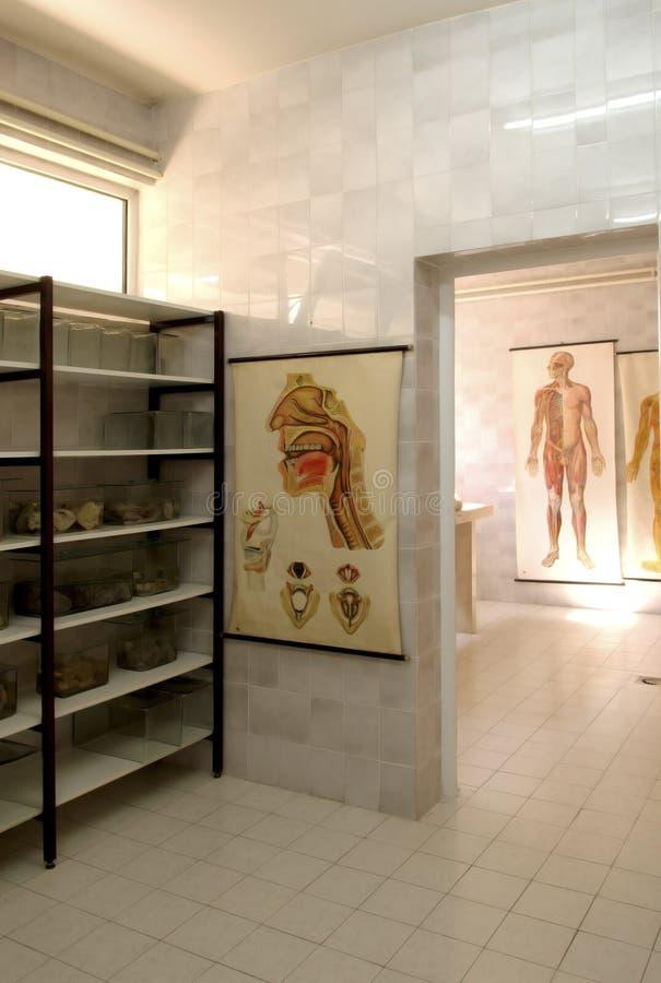 Sitio 2 de la anatomía fotos de archivo